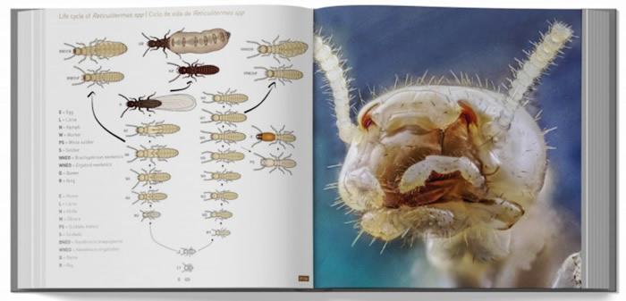 660 Fotografías sobre las termitas y su control