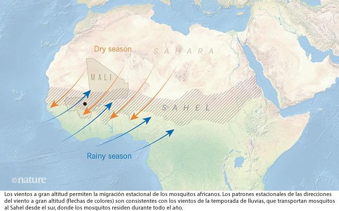 Mosquitos Anopheles migran cientos de kilometros con el viento