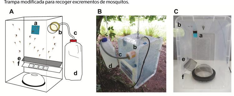 Deteccion de arbovirus en mosquitos analizando sus excrementos