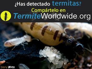termitas