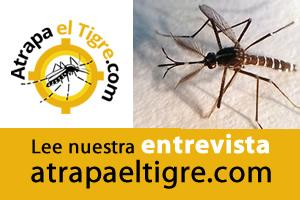 mosquito tigre